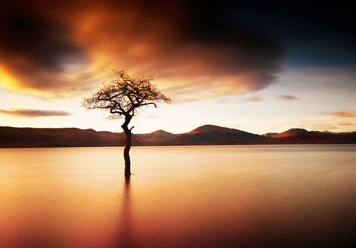 """That Tree"" at Milarrochy, Loch Lomond - a wider view 