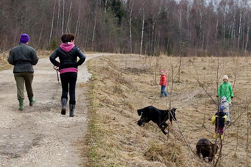 Выгул собак может быть запрещён для детей до 14 лет.