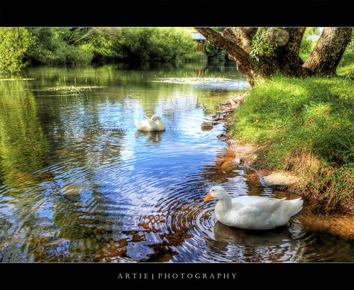 The Geese of Deloraine :: P-HDR | by :: Artie | Photography :: Travel ~ Oct