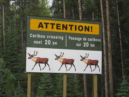 Caribou Crossing | by Contra Costa Times