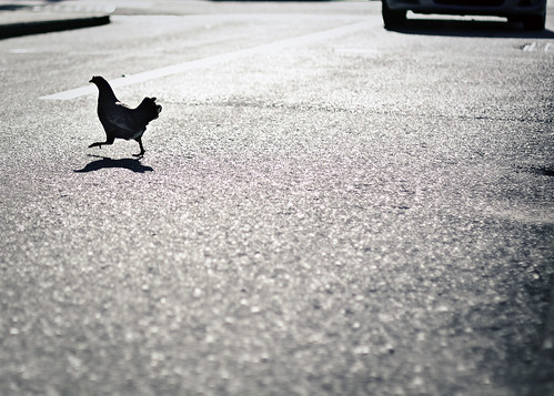 "insert your ""why did the chicken cross the road"" joke here! 