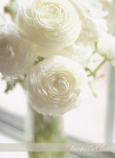 Ivory ruffles | by ImagesByClaire