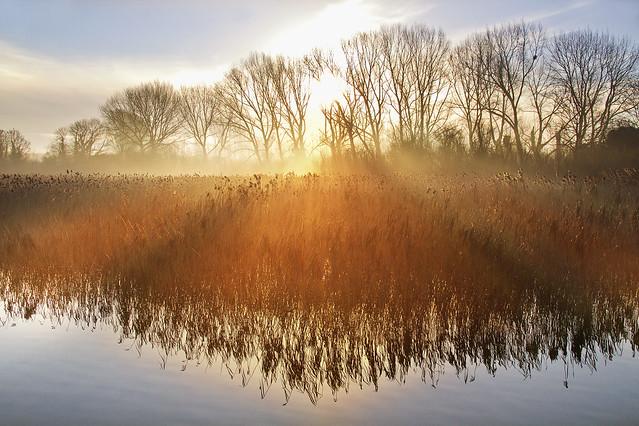 Morning magic Jan 2014