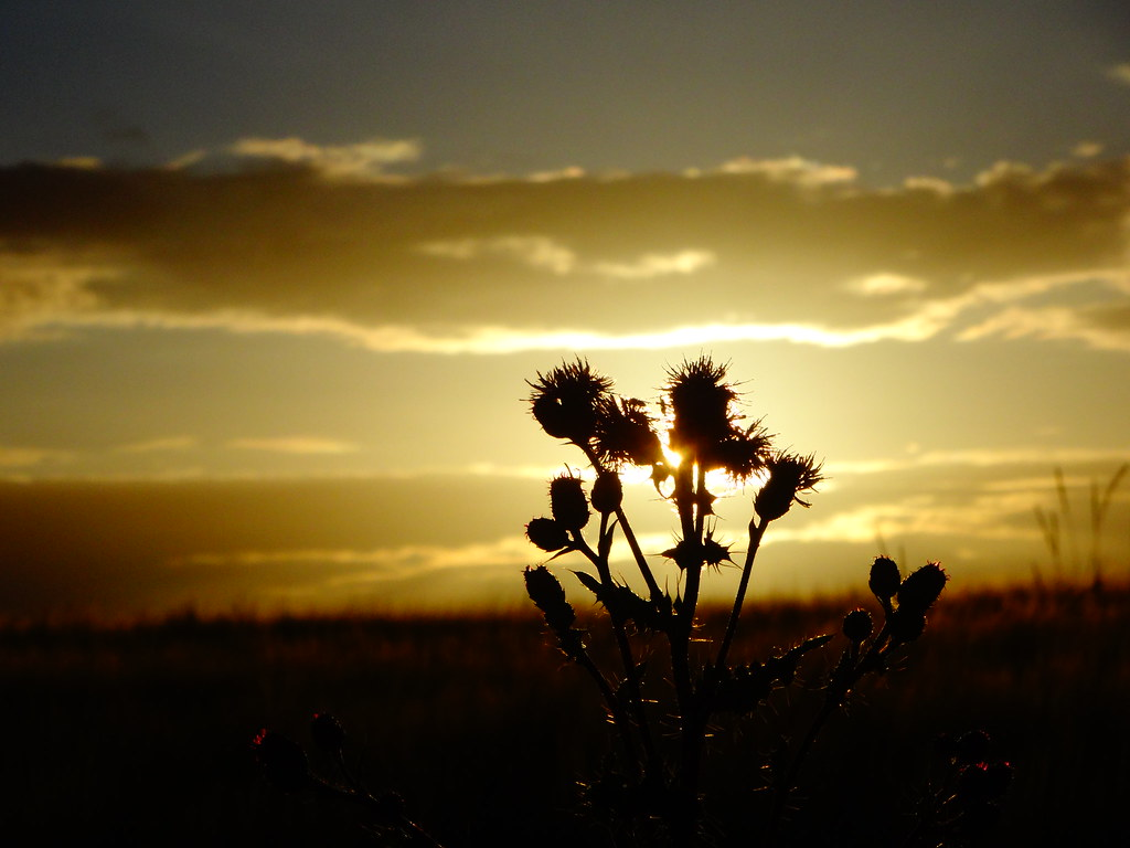 Thistle/Sunset 3