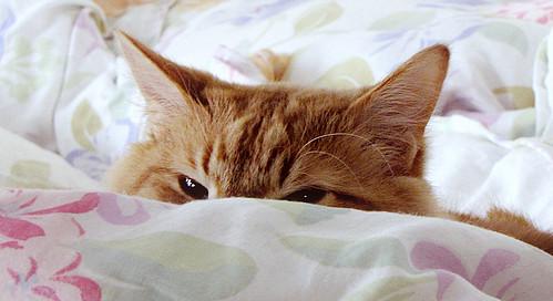cat ? what cat ?