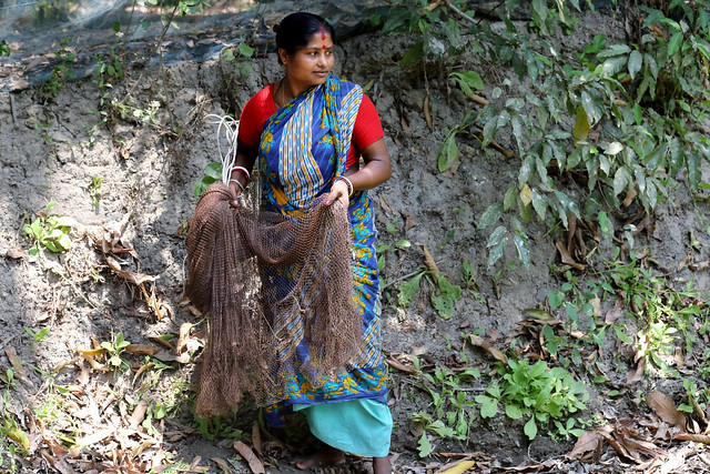Komola Roy preparing to cast her fishing net in her pond in Khulna, Bangladesh. Photo by Yousuf Tushar.
