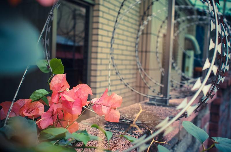 是花。|Chiayi