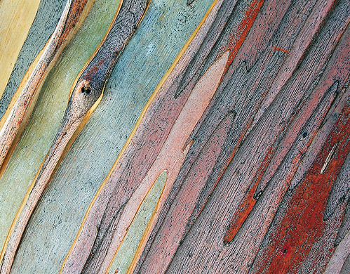 Snow gum patterns and textures | by Tanya Puntti (SLR Photography Guide)