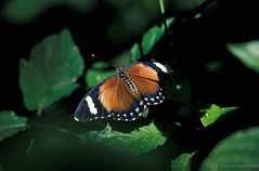 Closeup of a butterfly | by World Bank Photo Collection