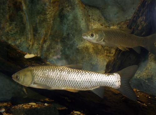 2008 07 25 athens tx freshwater fish hatchery 2946 for Texas fish hatchery