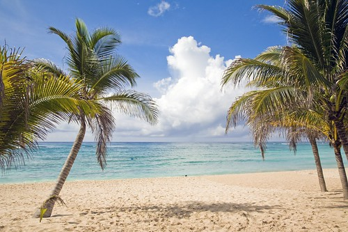 Beach Palm Trees Riviera Maya | by Grand Velas Riviera Maya
