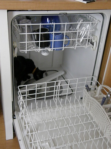 080329 moxie in dishwasher | by Dan4th