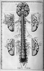 Bartolomeo Eustachi: Brain and Spine Anatomy, c. 1722 | by brain_blogger
