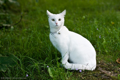 White Cat With Tabby Markings