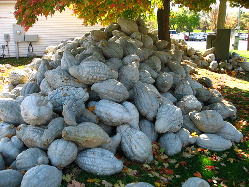 Mound of squash | by Linda N.