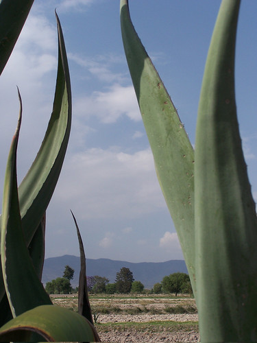 Agave | by The Hungry Cyclist