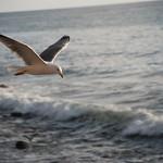 Playa Tasarte-Gaviota