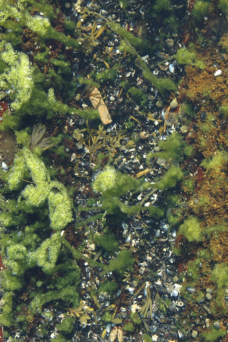 Tide Pool Life: Greens | by photofiend358