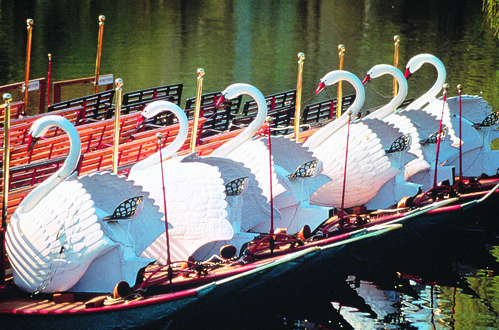 swan boats today 39 s boats are larger than the originals and flickr. Black Bedroom Furniture Sets. Home Design Ideas
