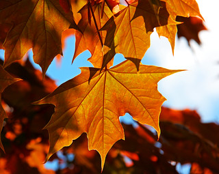 Leaves | by neiljs