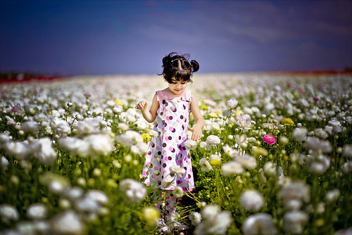 flower field | by mylaphotography
