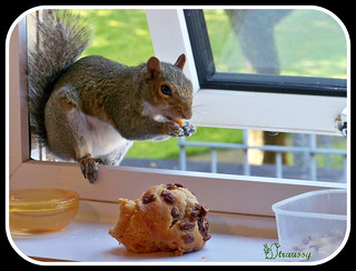 I`m sat comfortably..have a wee snack in front of me..Whats the 10 things you`re sharing then Mr Tagged.. | by straussy 1
