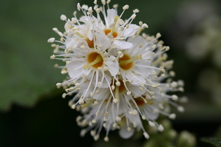 White Flowers Close up | by Dennis Goedegebuure