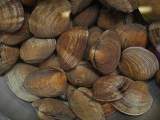 Clams | by Blue Lotus