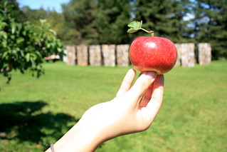 Apple in Hand | by amiefedora