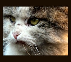 The Great Unbeatable Fighting Cat (AKA Kotofey)
