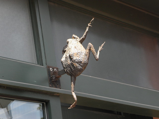 Leaping frog  in Burlington VT