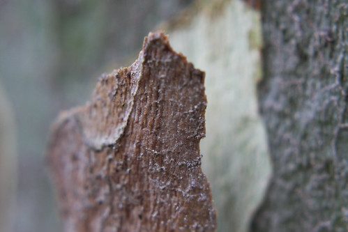 Tree Bark Macro | by erikrasmussen