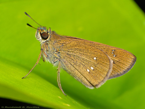 Three spotted skipper | by Rundstedt B. Rovillos