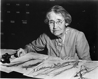Mary Agnes Chase (1869-1963), sitting at desk with specimens | by Smithsonian Institution