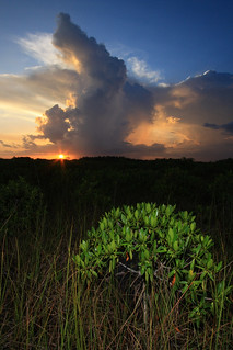 everglades national park, thunderstorm and sunset, miami-dade county, florida 1 | by Alan Cressler