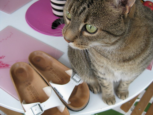 Birkenstocks and Cat | by Lou Morgan
