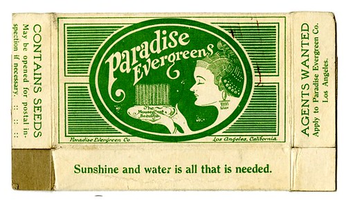 Seed packet for Paradise Evergreens
