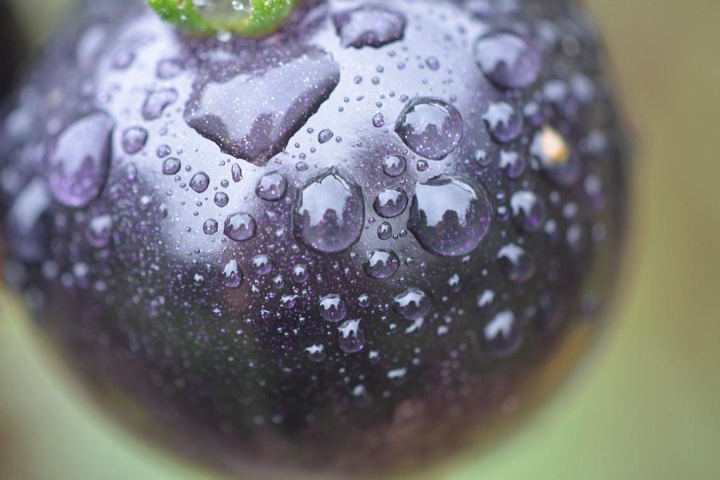 Black purple tomato