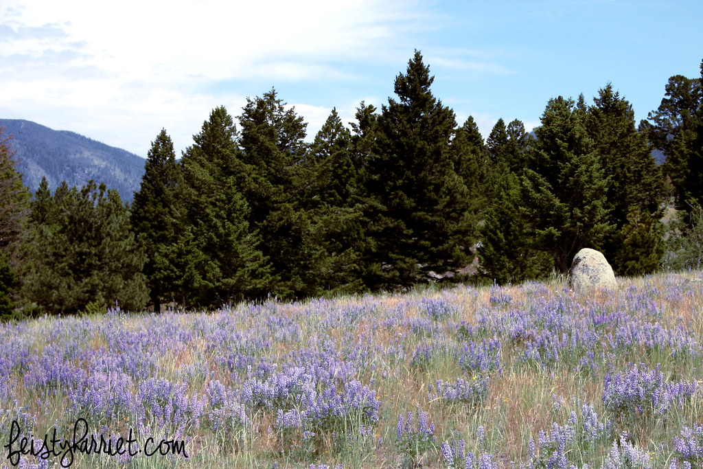 Montana Elkhorn Purple Flowers 4_feistyharriet_July 2014
