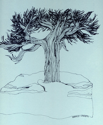 Bristlecone Pine, ink drawing