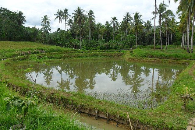 Fishpond, Bontoc, Southern Leyte, Philippines. Photo by Leah Jimenez, WorldFish.