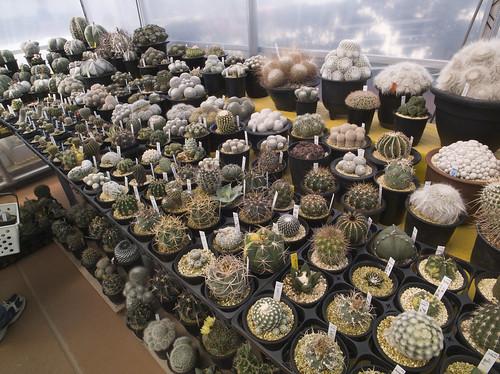 サボサボハウス - 鶴仙園 2014秋のサボテン・多肉植物フェア