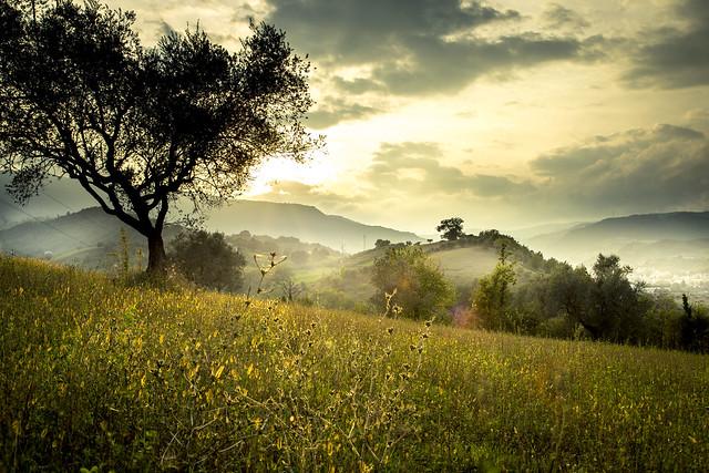 Rino Peroni: Landscape