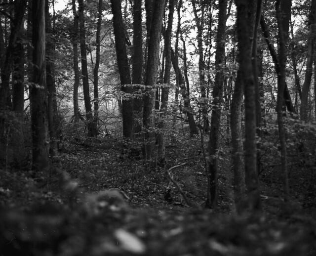 skogen, september 2014