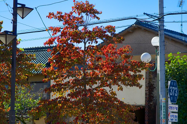 日光街道杉戸宿の紅葉