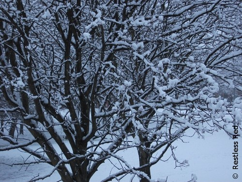 Snowtree 1 | by Restless.Red