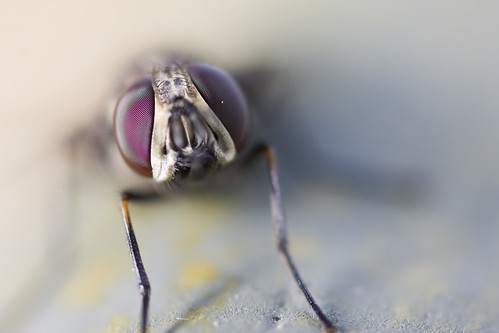 the fly. | by zenmasterlauren