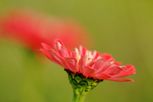 Red Bokeh | by _Maji_
