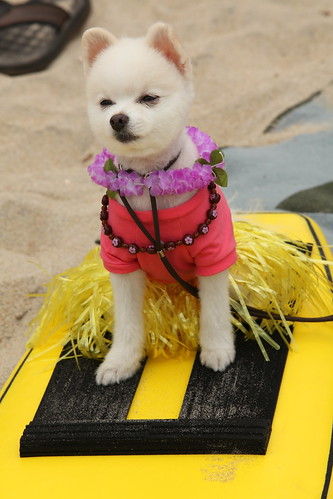 5th Annual Surf Dog Competition in Imperial Beach | by Port of San Diego