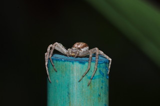 Pole Position Spider | by cruiznbye